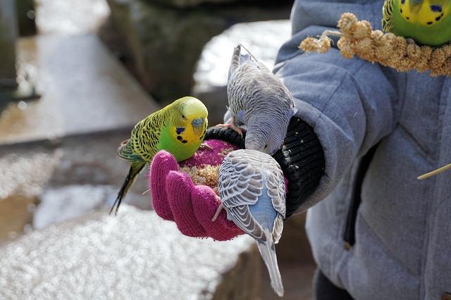 Παπαγάλοι οι φτερωτοί φίλοι μας